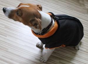 oblecky pro psy