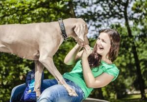 brit pes vymarsky ohar
